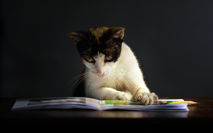 Cat-Reading-A-Book-1920x1200 (700x437, 252Kb)