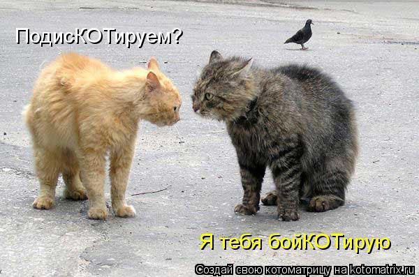 kotomatritsa_L (600x397, 161Kb)