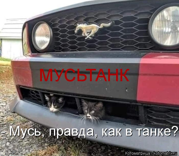 kotomatritsa_P2 (700x607, 225Kb)
