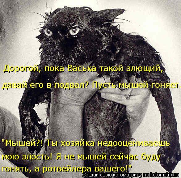 kotomatritsa_rP (586x576, 305Kb)
