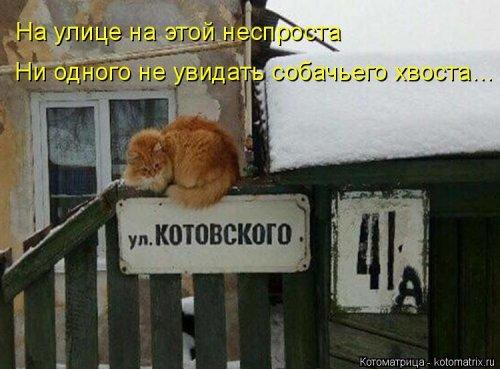 1568395274_kotomatricy-10 (500x369, 133Kb)