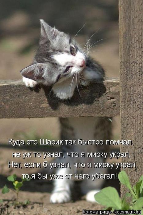 1568395321_kotomatricy-7 (466x700, 300Kb)