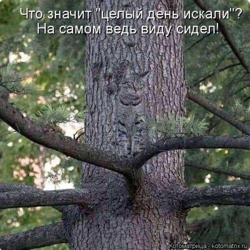 1568395279_kotomatricy-35 (500x500, 205Kb)
