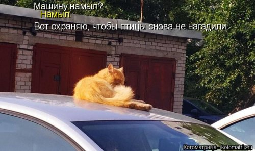1568395304_kotomatricy-33 (500x296, 119Kb)