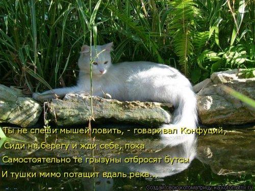 1568395309_kotomatricy-5 (500x375, 209Kb)