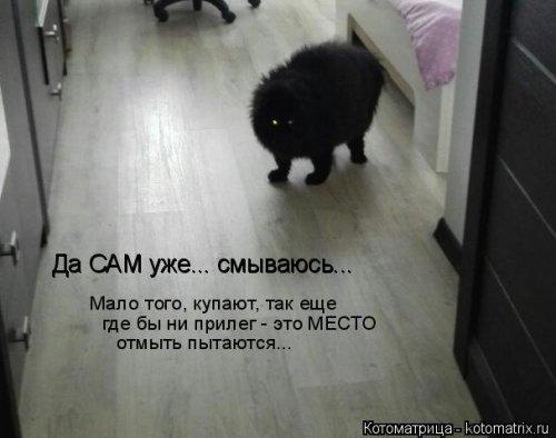 1568395318_kotomatricy-27 (500x394, 76Kb)