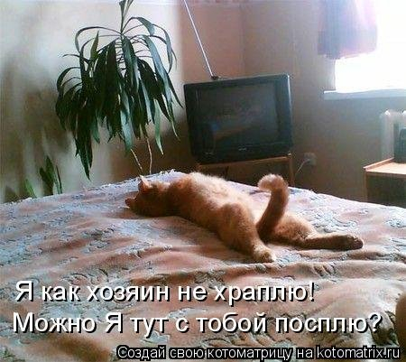 1568395294_kotomatricy-23 (450x401, 156Kb)