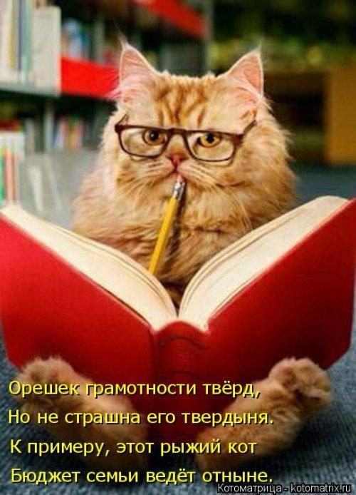 1568395264_kotomatricy-22 (500x694, 269Kb)