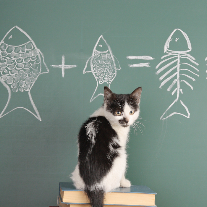 should-cats-eat-fish-square (700x700, 531Kb)