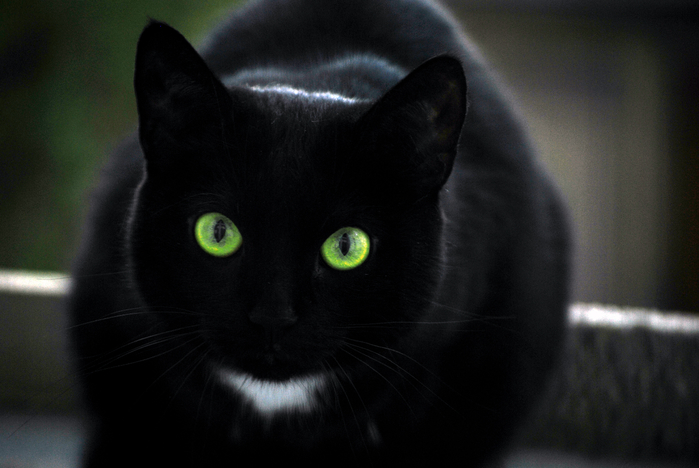 Animals___Cats_Black_cat_with_green_eyes_and_a_white_spot_044871_ (700x468, 276Kb)