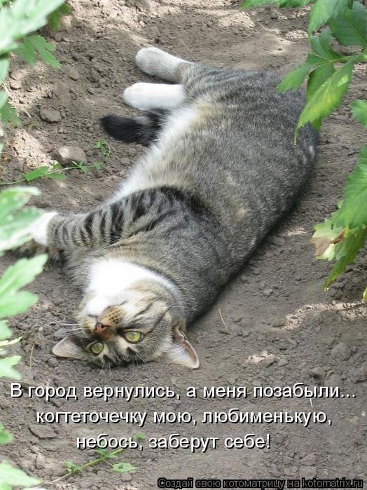 kotomatritsa_o (524x700, 387Kb)