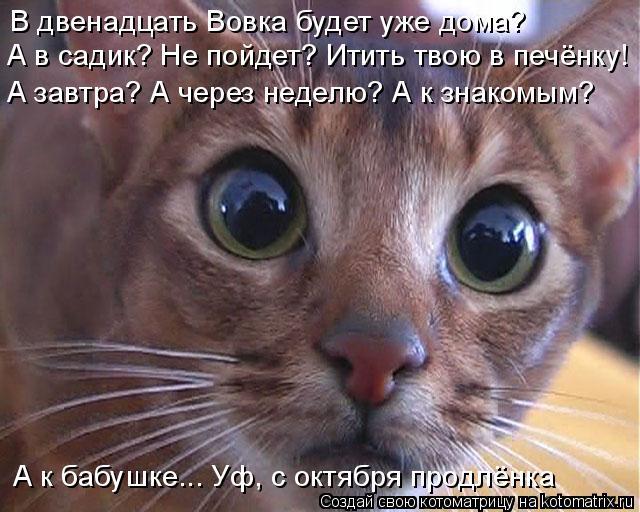 kotomatritsa_Q (1) (640x512, 244Kb)