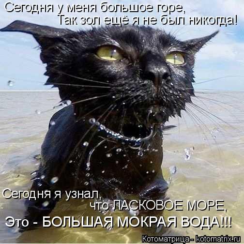 kotomatritsa_S (504x504, 180Kb)