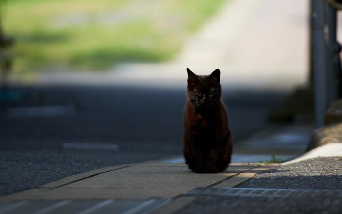 Animals___Cats_Black_Cat_hypnotizes_photographer_046809_ (700x437, 206Kb)