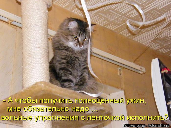 kotomatritsa_2m (700x524, 412Kb)