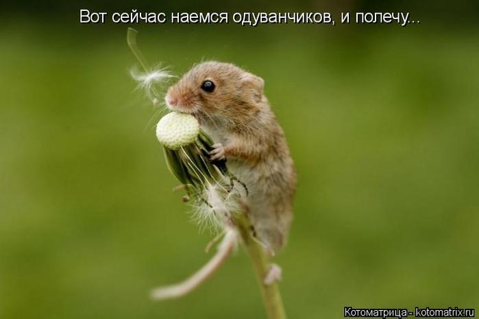 kotomatritsa_r (700x466, 162Kb)