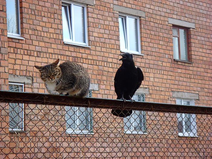 ворона и кот фото посты