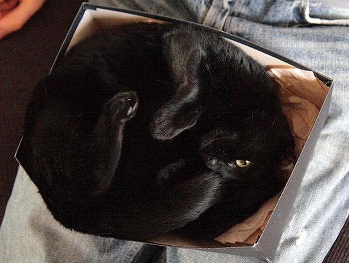 cat-sleeping-in-the-box-10 (700x528, 188Kb)