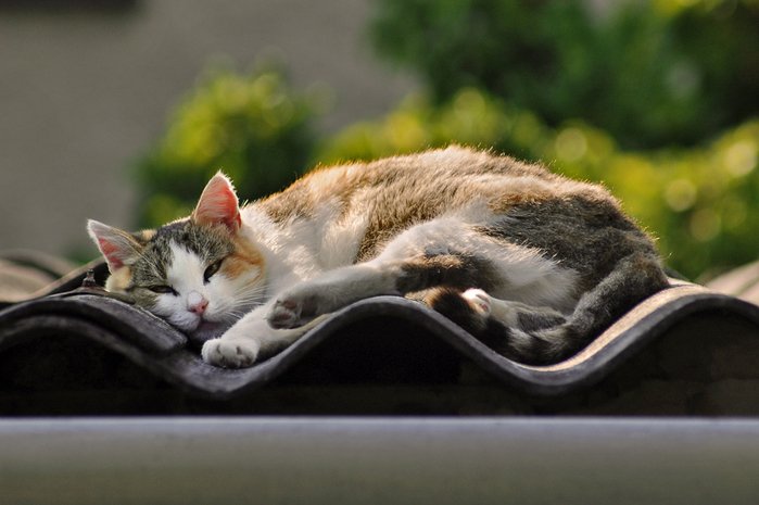 26_sleeping_cat (700x465, 367Kb)