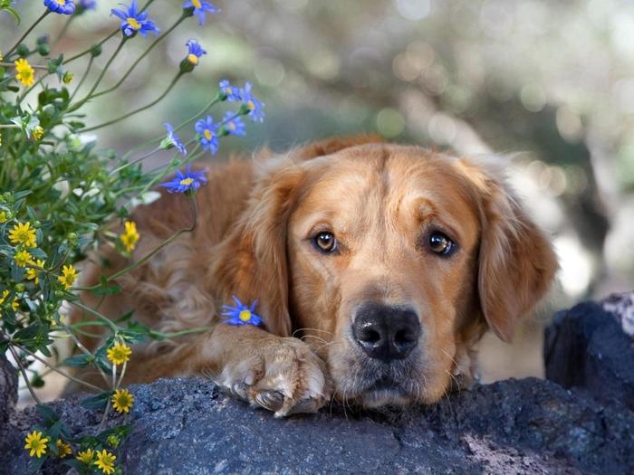 Sad-Dog-1024x768 (700x525, 385Kb)