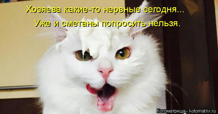 kotomatritsa_I0 (700x365, 201Kb)