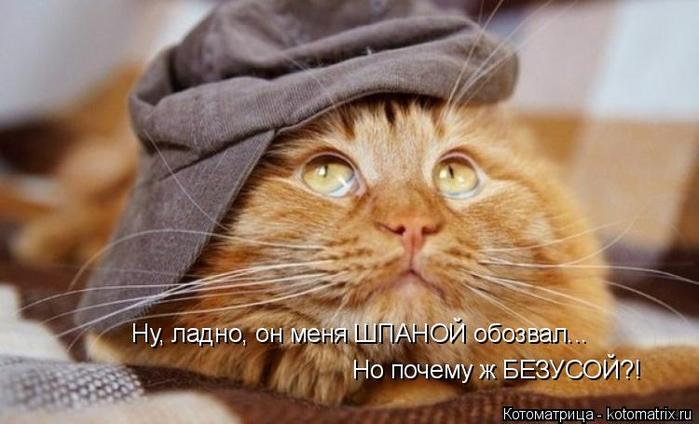 kotomatritsa_kG (700x424, 276Kb)