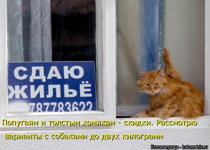 kotomatritsa_Qs (700x501, 323Kb)