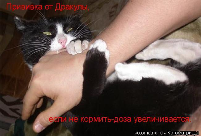 kotomatritsa_v (651x441, 151Kb)