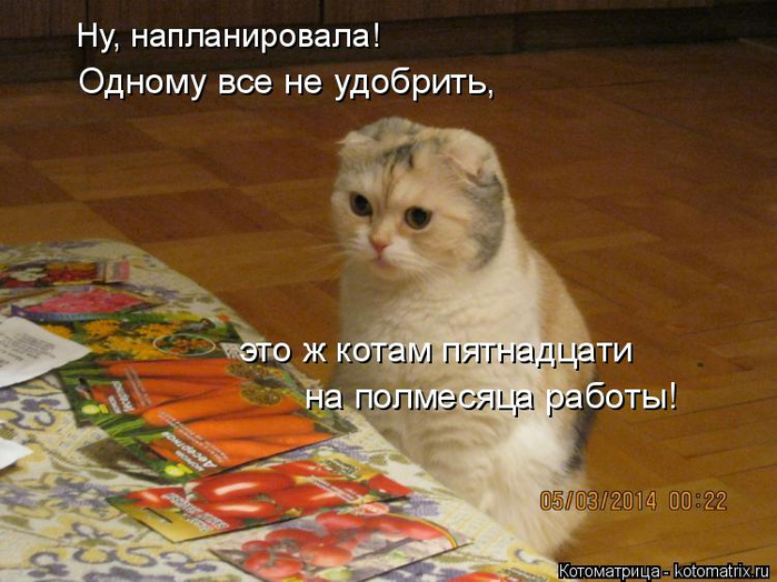 kotomatritsa_W (700x524, 379Kb)