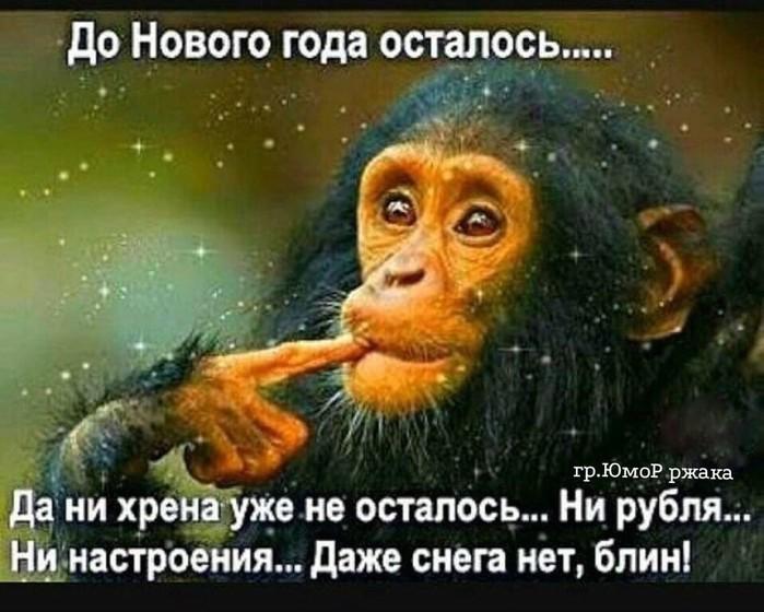4743317_image20191203 (700x560, 94Kb)