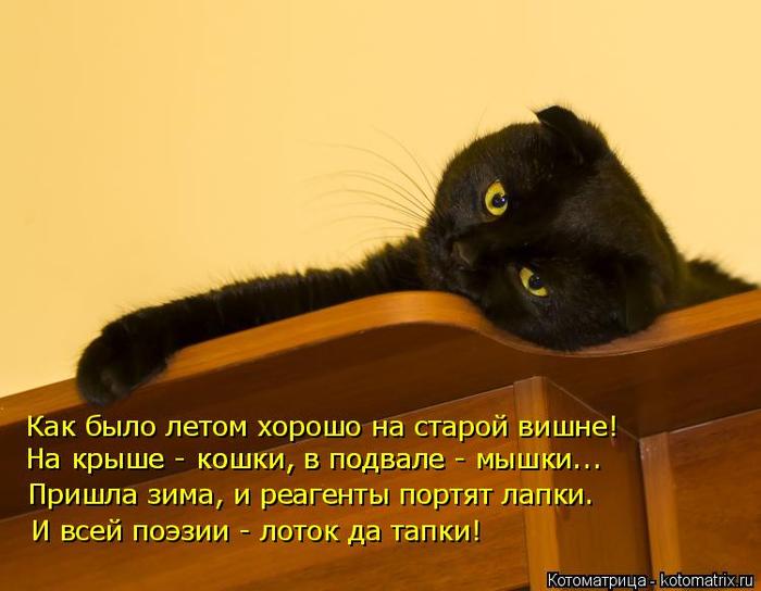 kotomatritsa_bJ (700x544, 290Kb)