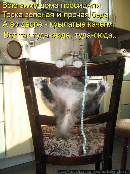 kotomatritsa_xK (524x700, 387Kb)