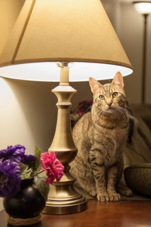 depositphotos_59409147-stock-photo-cat-in-a-lamp (299x450, 88Kb)