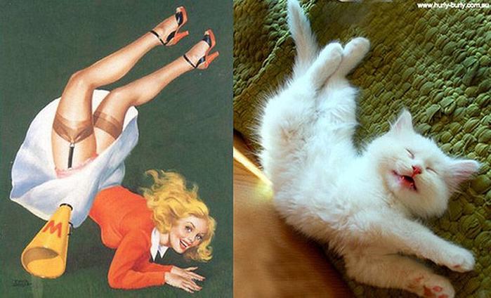 http_ catsthatlooklikepinupgirls.tumblr.com _717492 (700x424, 327Kb)