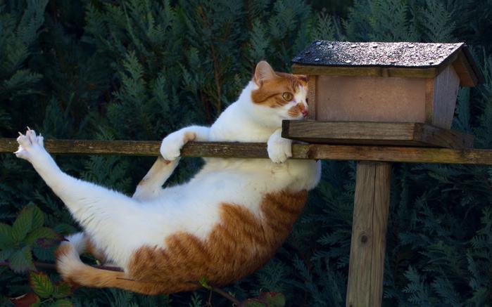 cat1403 (700x437, 353Kb)