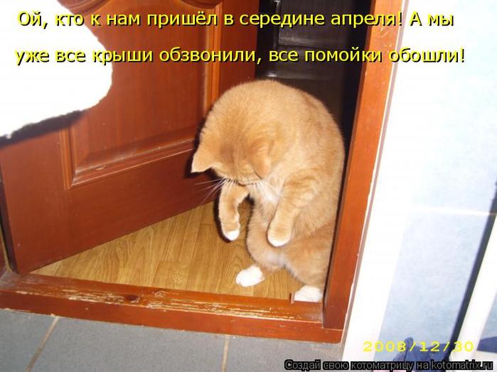 kotomatritsa_4 (700x524, 339Kb)