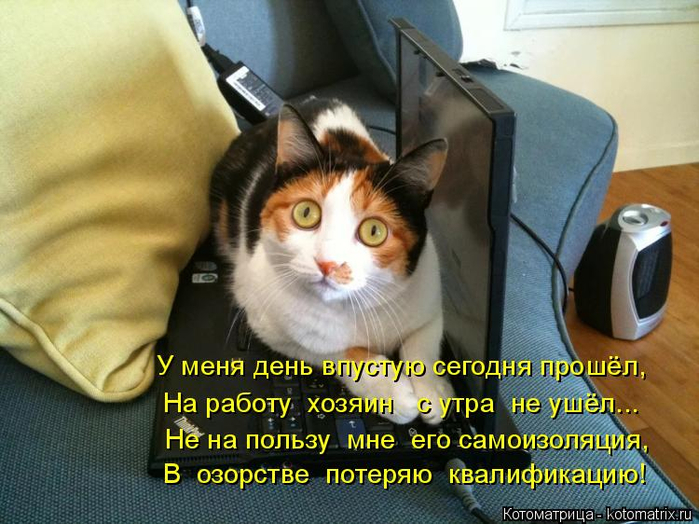 kotomatritsa_s (700x524, 392Kb)