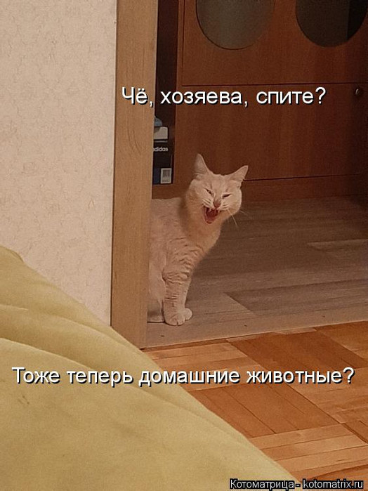 kotomatritsa_Ve (524x700, 276Kb)