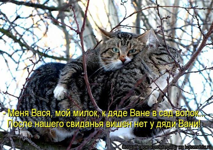 kotomatritsa_Oj (700x493, 468Kb)