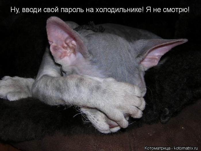 kotomatritsa_R (700x524, 226Kb)