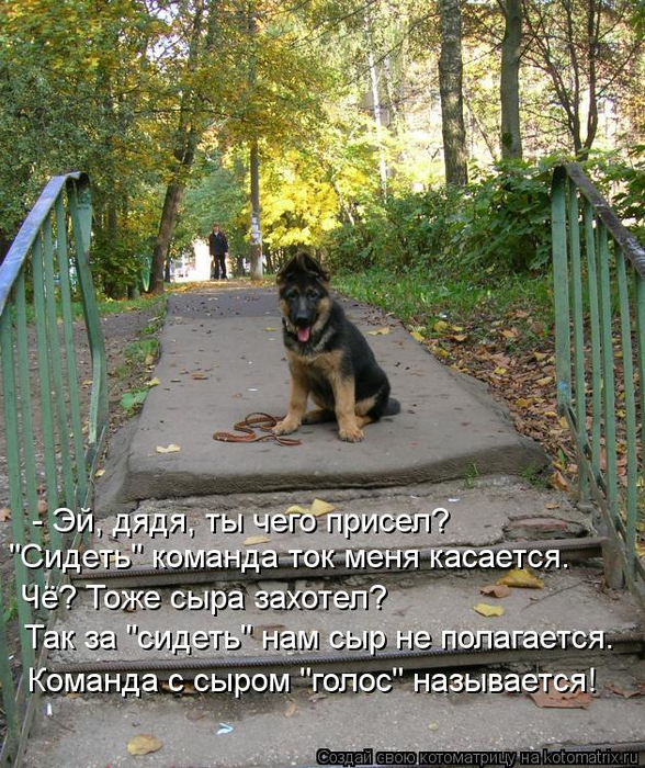 kotomatritsa_t (1) (588x700, 530Kb)