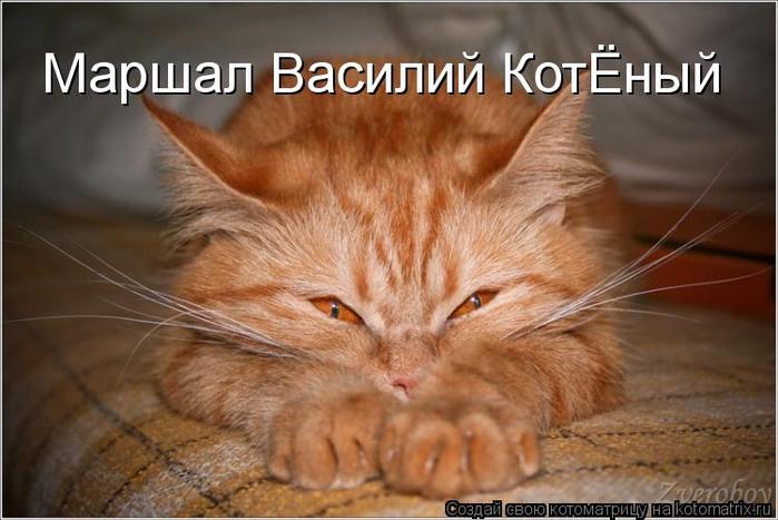 kotomatritsa_qz (700x467, 297Kb)