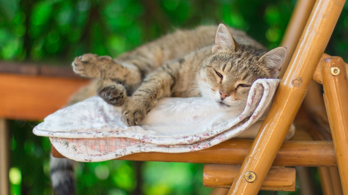 2018Animals___Cats_Gray_cat_asleep_on_the_bench_126630_24 (700x393, 293Kb)