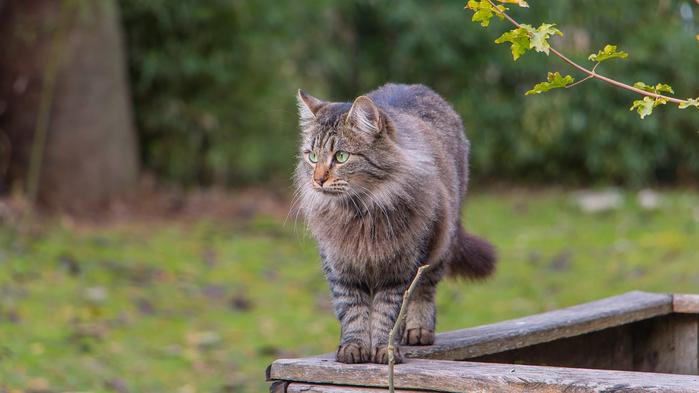 cat-842358_1280 (700x393, 266Kb)