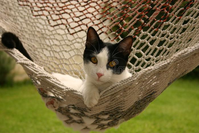 cat-hammock-560828 (700x466, 356Kb)