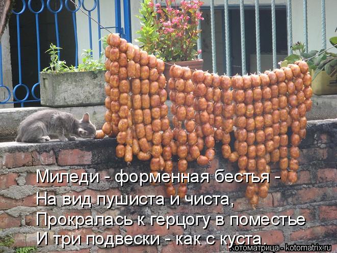 kotomatritsa_1a (661x496, 313Kb)
