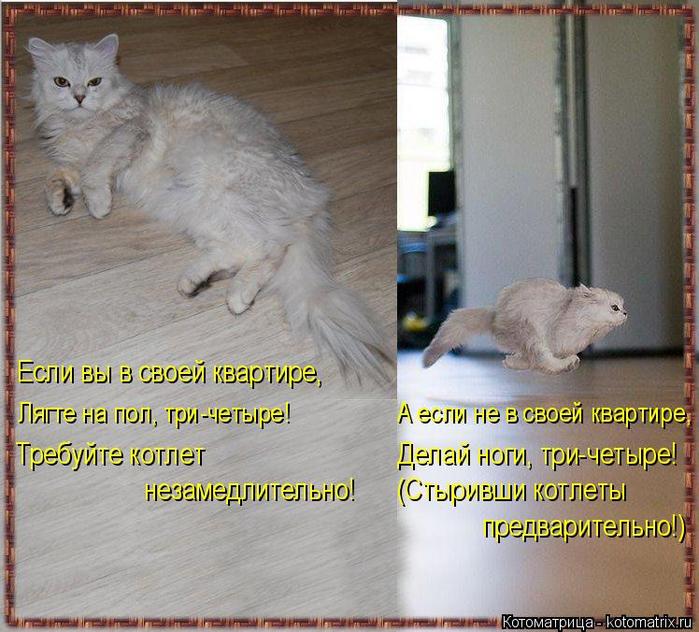 kotomatritsa_3 (700x632, 453Kb)