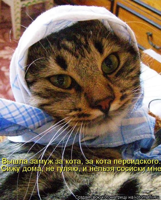 kotomatritsa_5 (563x700, 541Kb)