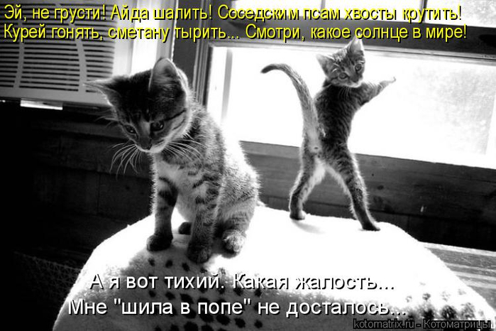 kotomatritsa_cg (700x466, 229Kb)