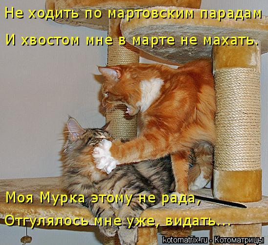 kotomatritsa_eA (548x500, 277Kb)